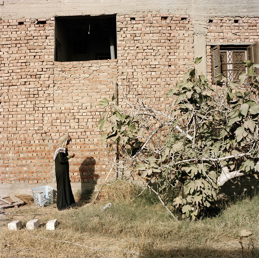 El Dessamy, Egypt, 2012. Ines collects fruits from the fig tree behind her home.