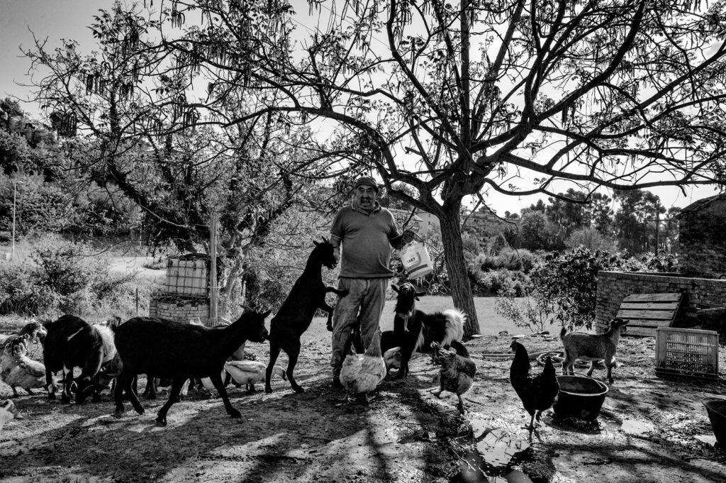 Evaristo con le sue capre trasportate a Spinetoli dalla campagna di Trisungo © Giovanni Marrozzini