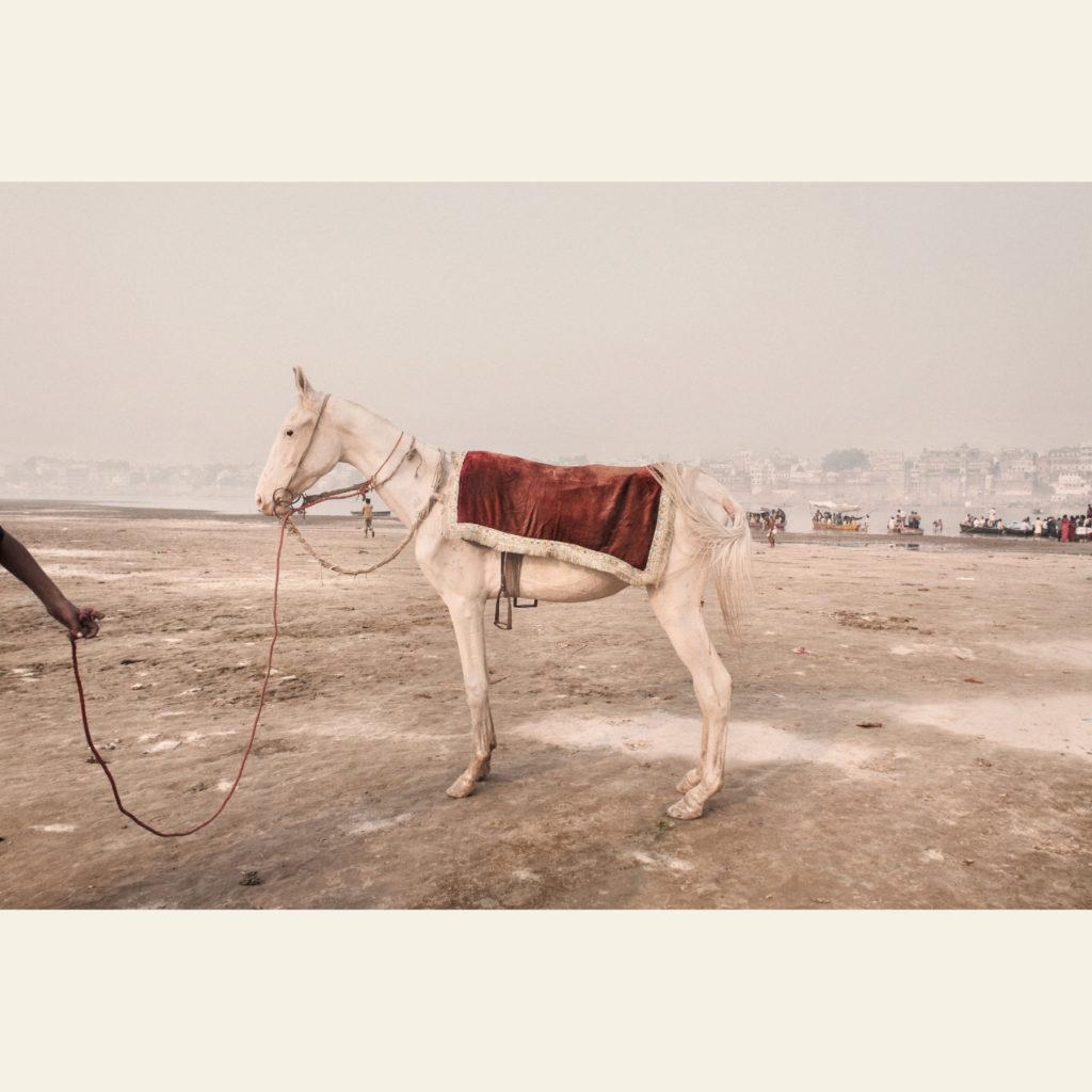 Un cavallo usato per trasportare i fedeli lungo le rive del Gange, Varanasi, 2008 - © Giulio Di Sturco.